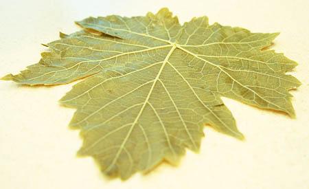 stuffed-grape-leaves-single-leaf.jpg