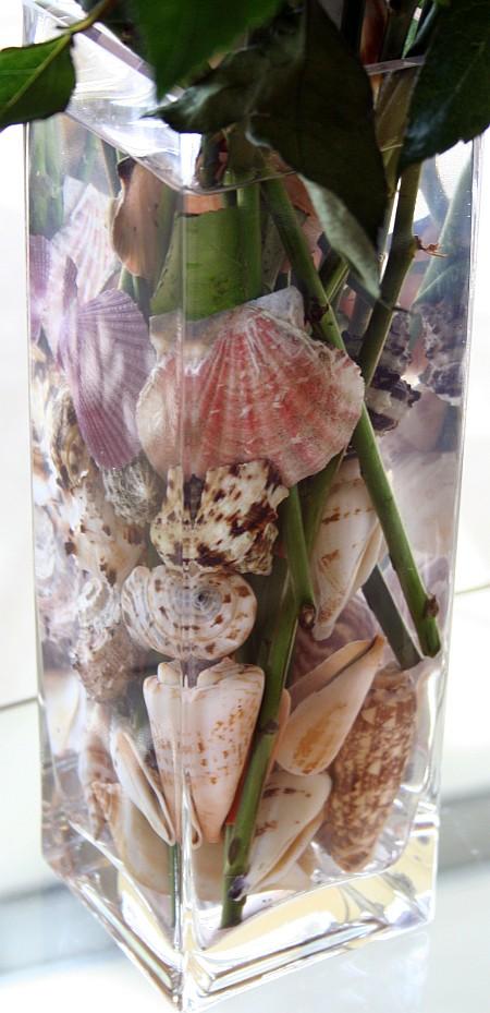 shells_in_vase.jpg