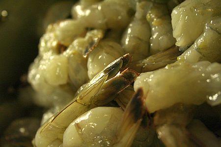 raw-shrimp.jpg