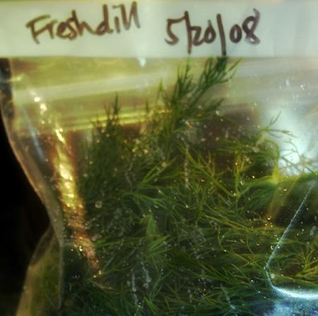 fresh-dill.jpg