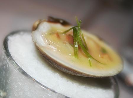 blue-zoo_clam.jpg