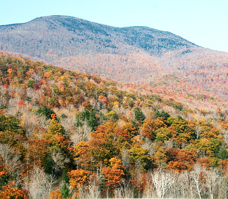 vermont-eat-local_trees-and-hills.jpg