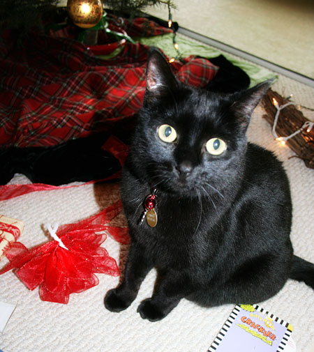 nimue-and-xmas-bow