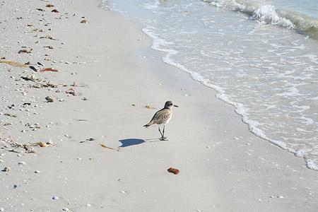 visit-at-judy_bird-at-sanibel-island-beach