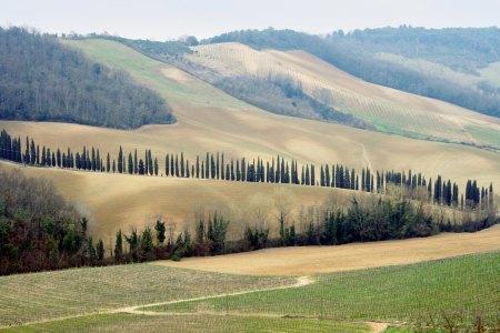 sangimignano_vineyards_small