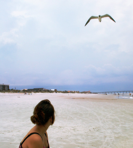 new-world-salad_beach-party-seagull1
