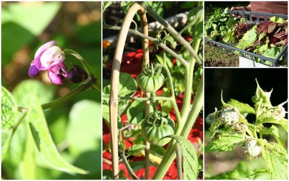 garden-july_collage