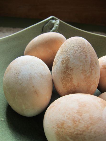 Eostre Eggs